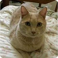 Adopt A Pet :: Buffy - Mesa, AZ