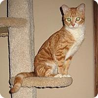 Adopt A Pet :: TABITHA - Phoenix, AZ