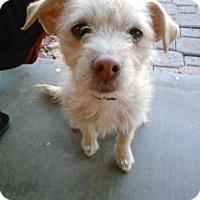 Adopt A Pet :: Milly - Only $65 adoption fee! - Litchfield Park, AZ
