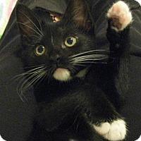 Adopt A Pet :: Chadron - North Highlands, CA