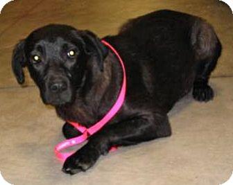 Labrador Retriever Mix Dog for adoption in Melrose, Florida - Margo