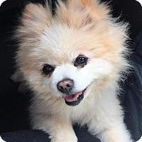Adopt A Pet :: **GIZMO** meet July 8th! - Mukwonago, WI