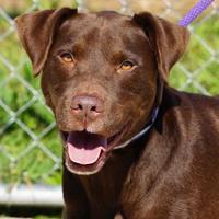 Adopt A Pet :: Baxter - Toccoa, GA