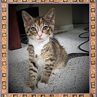Adopt A Pet :: Penny - Mt. Prospect, IL