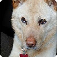 Adopt A Pet :: Cloud - West New York, NJ