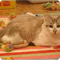 Adopt A Pet :: Fluffy--PETSMART - Muncie, IN