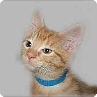 Adopt A Pet :: Cody - Montgomery, IL