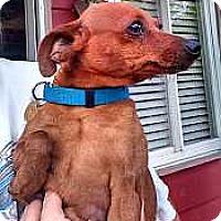 Adopt A Pet :: Reba - Columbus, OH