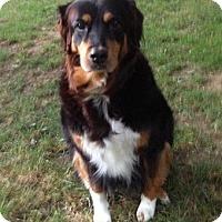 Adopt A Pet :: Pebbles - New Canaan, CT