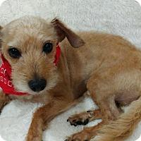 Adopt A Pet :: Pesto - San Antonio, TX