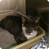 Adopt A Pet :: Pearl Pureheart - Richboro, PA