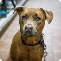 Adopt A Pet :: Myria - Rigaud, QC