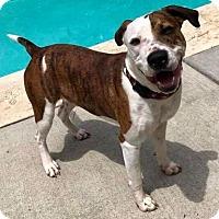 Adopt A Pet :: Ernie - Durham, NC