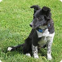 Adopt A Pet :: COLTON-adoption pending! - Nampa, ID