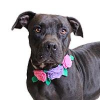 Adopt A Pet :: Melanie - Chico, CA