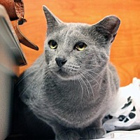 Adopt A Pet :: Gunner - Dallas, TX