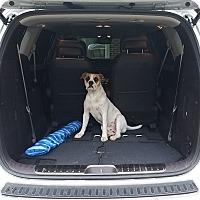 Adopt A Pet :: Brutus - Huntsville, AL