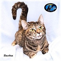 Adopt A Pet :: Sasha - Howell, MI
