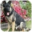 Photo 1 - German Shepherd Dog Dog for adoption in Los Angeles, California - Ozlo von Lundgren