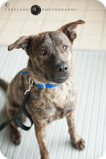 Shepherd (Unknown Type) Mix Dog for adoption in Jackson, Michigan - Buster