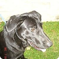 Adopt A Pet :: Jupiter - Stilwell, OK