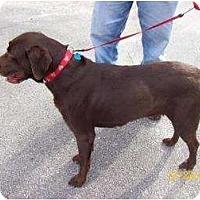 Adopt A Pet :: Juliette - Altmonte Springs, FL