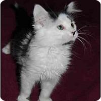 Adopt A Pet :: Puff - Modesto, CA