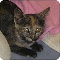 Adopt A Pet :: Ambretta - lake elsinore, CA