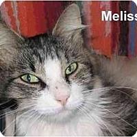 Adopt A Pet :: Melissa - AUSTIN, TX