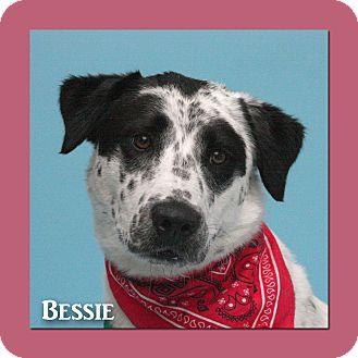 Australian Cattle Dog Mix Dog for adoption in Aiken, South Carolina - Bessie