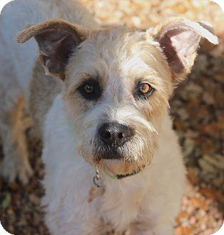 Terrier (Unknown Type, Medium) Mix Dog for adoption in Norwalk, Connecticut - Brewster