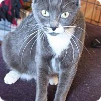Adopt A Pet :: Piper - Putnam, CT