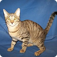 Adopt A Pet :: Elton - Colorado Springs, CO