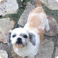 Adopt A Pet :: Star - Overland Park, KS