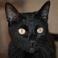 Adopt A Pet :: CHAKA - Ojai, CA