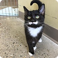 Adopt A Pet :: Cooley - Philadelphia, PA