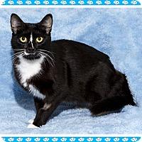 Adopt A Pet :: Gogo - Mt. Prospect, IL