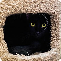 Adopt A Pet :: Mopsy - Boise, ID