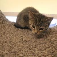 Adopt A Pet :: Memphis - Waupun, WI