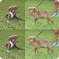 Adopt A Pet :: Briggs 💚 Fostered in NE 8/05! - Brattleboro, VT