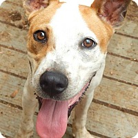 Adopt A Pet :: BUDDY - Anderson, SC