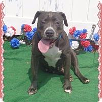 Adopt A Pet :: CHELLE - Marietta, GA