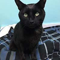 Adopt A Pet :: Cole - Blasdell, NY