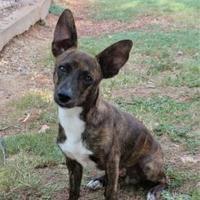 Adopt A Pet :: Ryder - Wichita Falls, TX