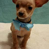 Adopt A Pet :: Nathaniel - Shreveport, LA