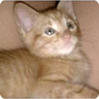Adopt A Pet :: Scooter - Morgan Hill, CA