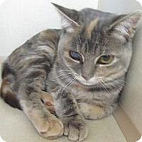 Adopt A Pet :: Uno - Riverhead, NY