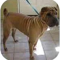 Adopt A Pet :: Lola - Bethesda, MD