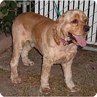 Adopt A Pet :: Riley - Tacoma, WA