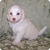 Adopt A Pet :: Max - La Habra Heights, CA